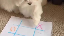Cute Puppies Playing Tic Tac Toe
