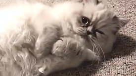 Cute Cat Video (57)