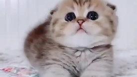 Chasing Kitten