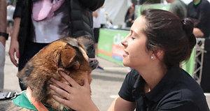 O Melhor da Cão Corrida 2017