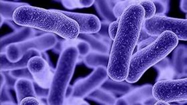 19.09.20 - 1 часть - Таинственные и могущественные бактерии и вирусы