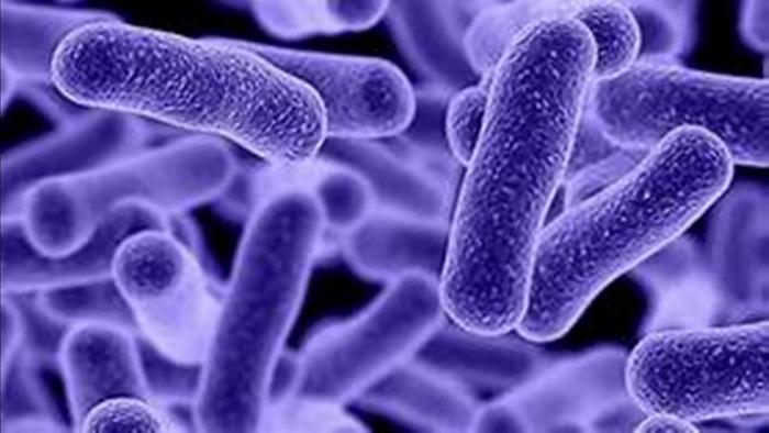 17.10.20 - Таинственные и могущественные бактерии и вирусы