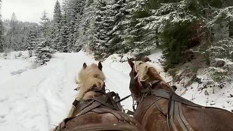 Cu sania trasa de cai