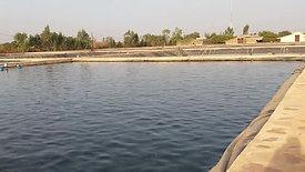 Pêche de Tilapia