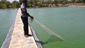 Pêche de contrôle Tilapia