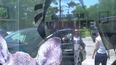 Savannah Wildlife Rescue Center