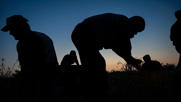 Farming Under Fire in Gaza