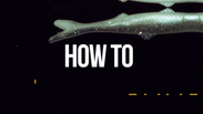 HOW TO FISH