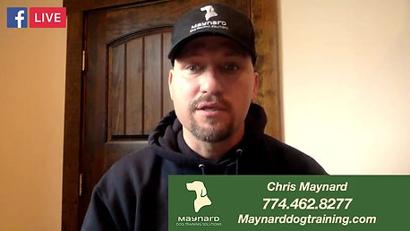 Maynard Dog Training Solutions on 2020-04-16 at 09.13.48