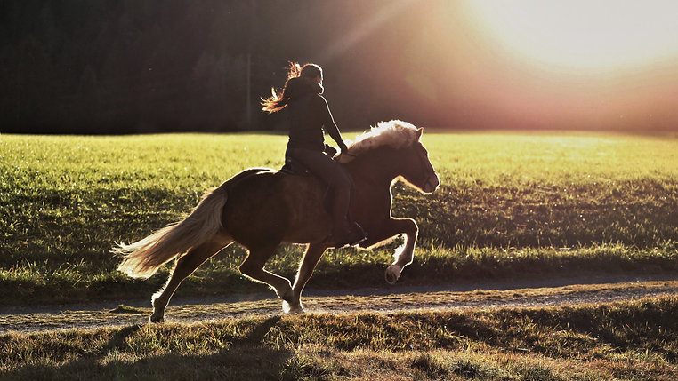 Pferde im Training