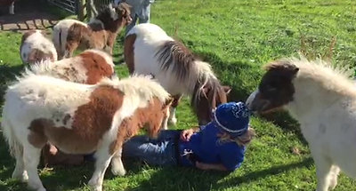 Selecting baby ponies