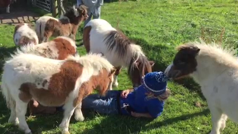selecting Baby therapy ponies