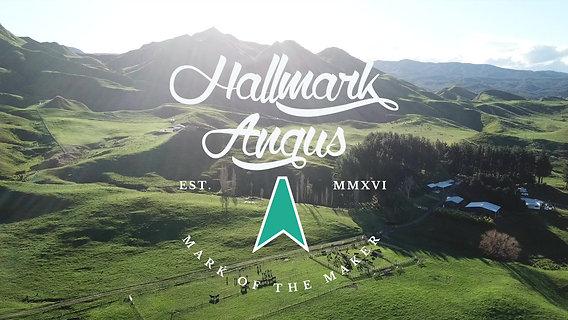 Hallmark 2021 Sale Video