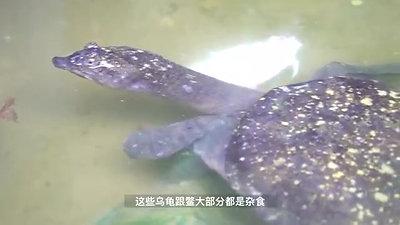 Caring Turtles 你养乌龟的方式对了吗