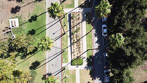 Brand Park Palms