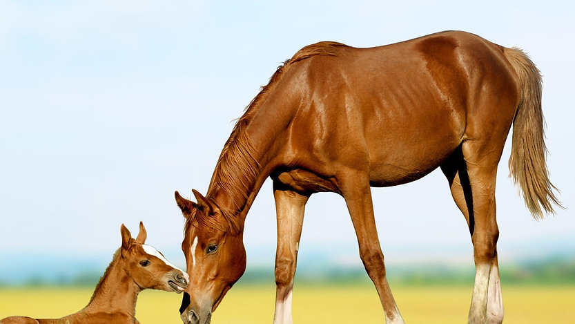 Management & Applied Therapy for all Breeding Stock