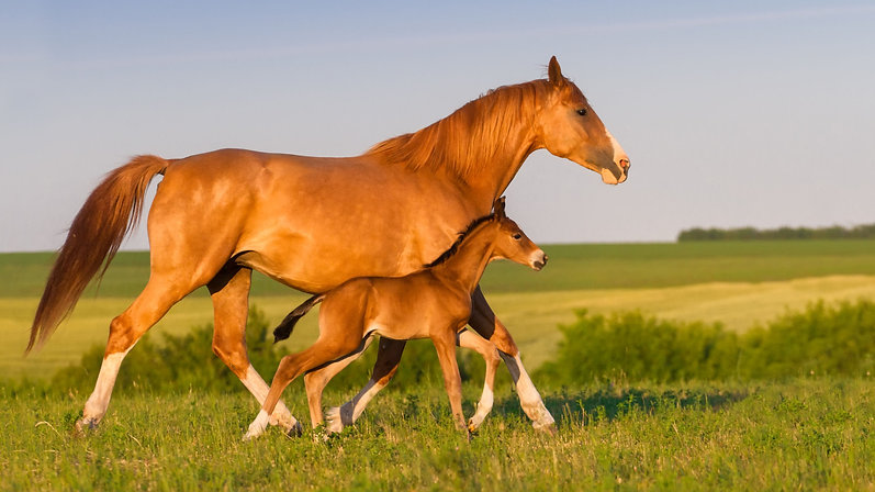 MARE AND FOAL CARE