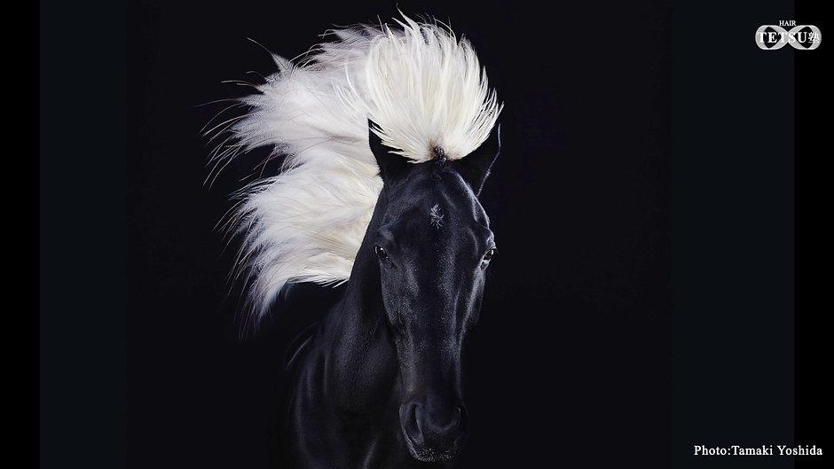 Horse part3