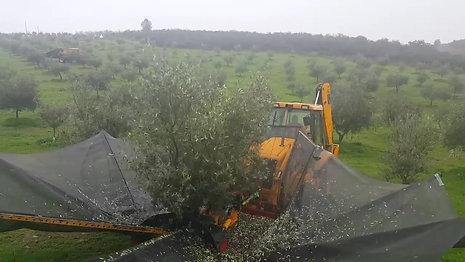 Colheita Mecânica em Portugal