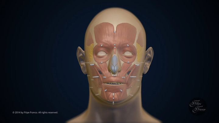 Facial Approximation of Subject D