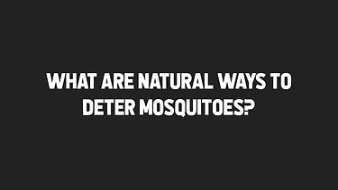 What are natural ways to deter mosquitoes?