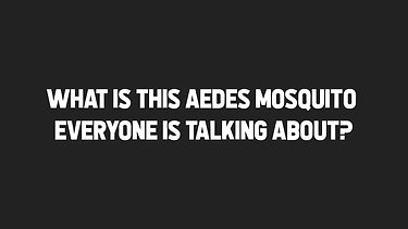 What is this Aedes mosquito everyone is talking about?