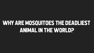 Why are Mosquitoes the Deadliest Animal in the World?