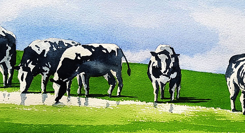 Cornwall Cows