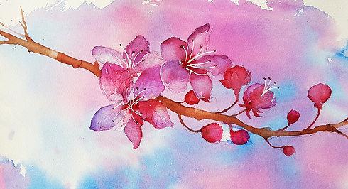 Cherry Blossom - the main event.