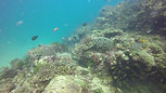 Plongée scientifique Fonds marins d'Anakao