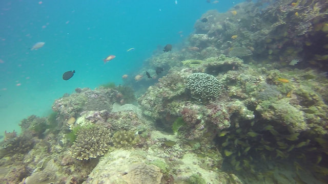 Echantillonnage de coraux noirs