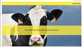 Moving and Treating Animals Safely - Dairy