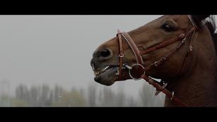 PMU 'Live Your Emotions' Director: Georgi Banks-Davies