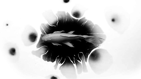 AfterEffects_tutorial_pin_fish_animation_ink_mask_alpha_matte_YunYiiYeh葉小妖葉蘊儀2D_fish