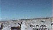 Antelope - 2 Ways