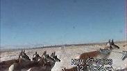 Antelope Clip 3