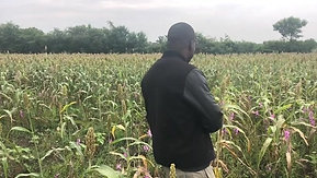 Sorghum yield never this high in his life.