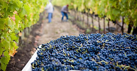 Discover the world of #winemakers, #winemaking, #vinyards