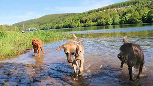 Reportage über das Hundeparadies Eifel