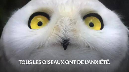 Tous les oiseaux ont de l'anxiété