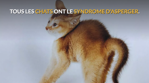 Tous les chats on le syndrome d'asperger