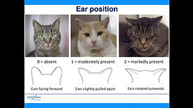 Recognising pain in cats