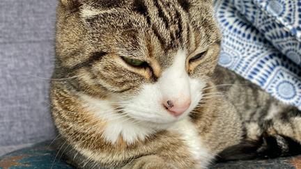 New options in feline OA