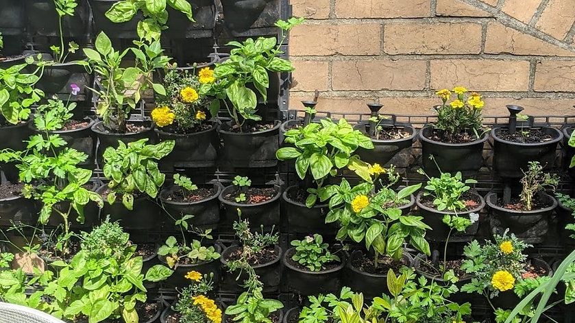 Edible Gardening For Apartments and Small Spaces
