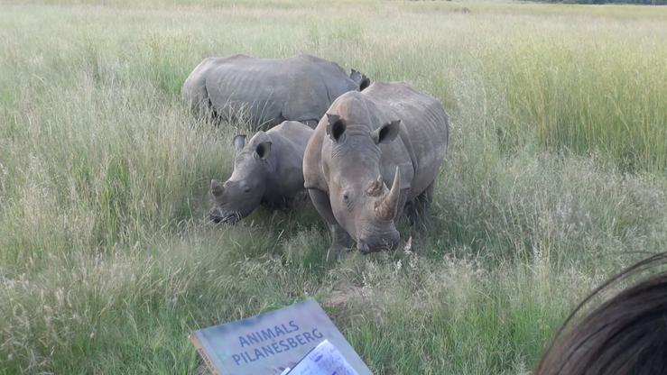 Animal Behaviour Field Course 2017 (South Africa)