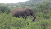 Animal Behaviour Field Course 2016 (South Africa)