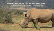 Rhino notching
