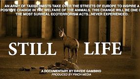 """Progetto Serra, Ministero dell'ambiente, """"Still Life"""" di Davide Gambino"""