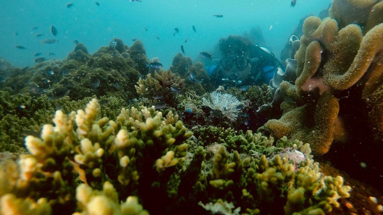 Dive with Area11DiverPQ