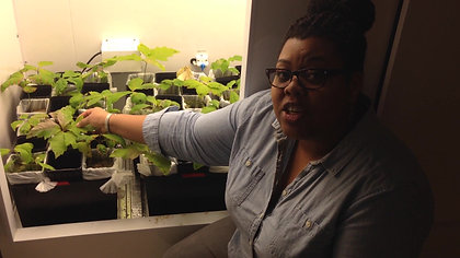A Day in the Life of a Plant Scientist